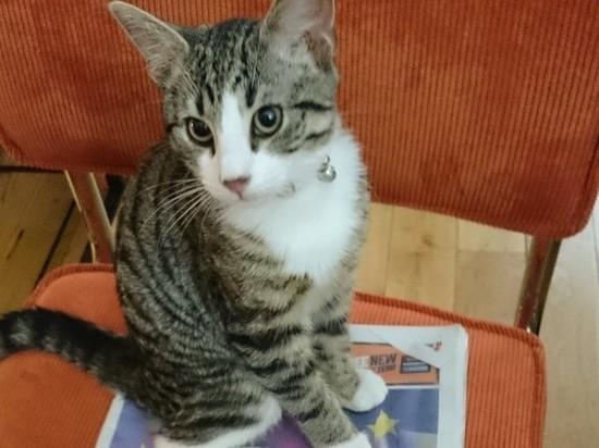 УАссанжа отобрали любимого кота