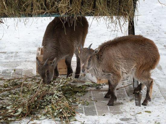 В Новосибирском зоопарке появилось новое животное