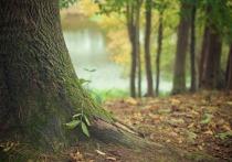 Незаконные вырубки, лесные пожары и прочие проблемы лесного фонда обсудили на заседании Совета по правам человека при Президенте РФ