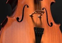 Подробности кражи старинной виолончели: музыкант забыл инструмент в подъезде