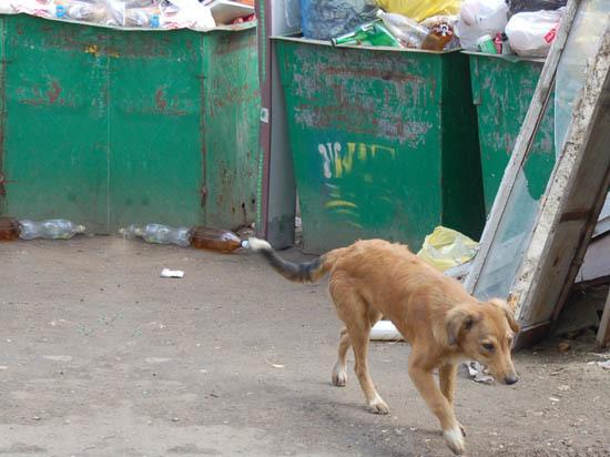 Самый ли высокий тариф на мусор  в Саратовской области?