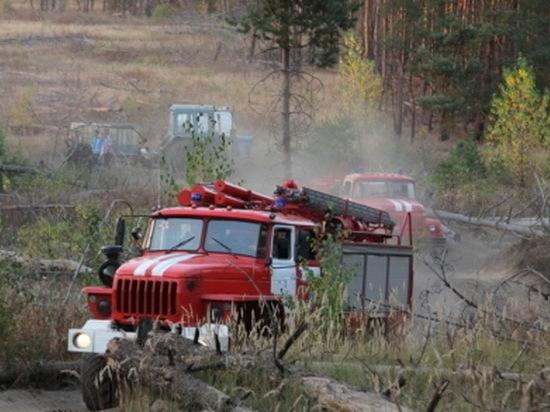 В воронежском облправительстве подвели итоги пожароопасного периода