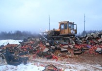В Смоленской области уничтожили 39 тонн подозрительных фруктов