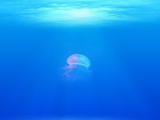 Загадочный гул на дне океана удивил учёных