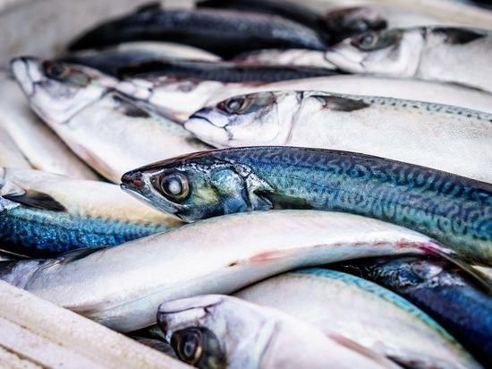 Российские ученые нашли способ отличить дорогую рыбу от дешевой