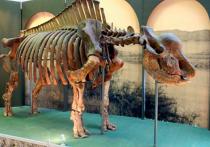 Международная группа исследователей под руководством уральского палеонтолога Павла Косинцева пришла к выводу, что эласмотерии, или «сибирские единороги», вымерли не пару сотен тысячелетий назад, а значительно позднее, застав на планете древних людей