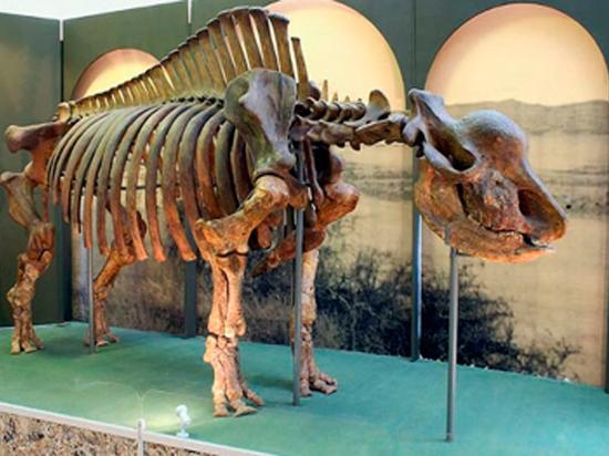 «Единороги» жили бок о бок с людьми, предположили палеонтологи