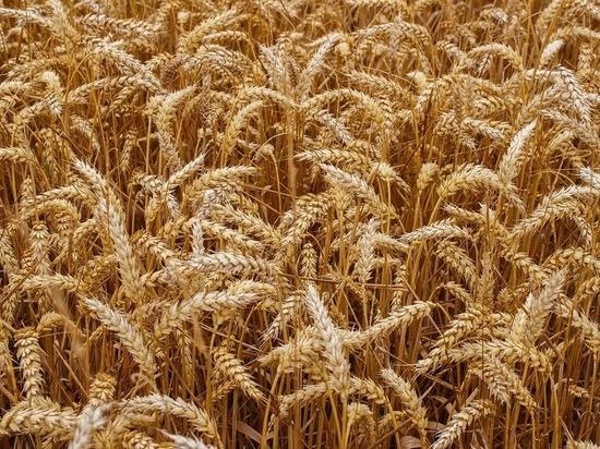 Агрономическое чудо Монголии основано на достижениях селекционеров Бурятии