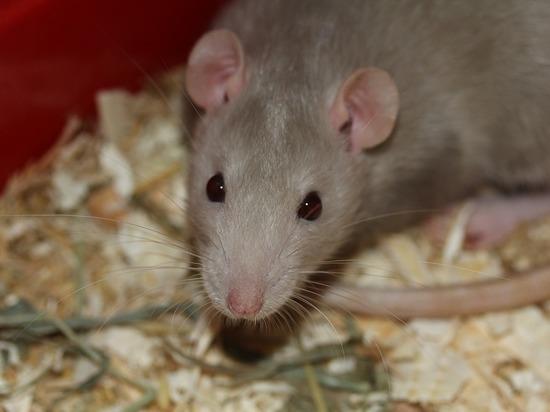 Нашла пакет за батареей: инцидент с крысиным ядом в казанской школе
