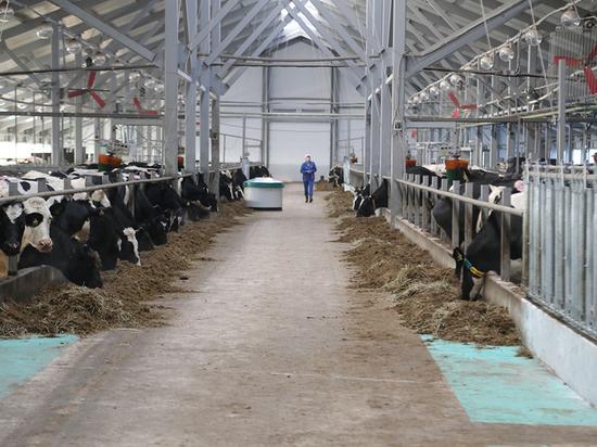Роботизированный животноводческий комплекс открылся в Вологодском районе