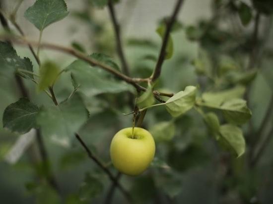 Садоводство развивается вВолгоградской области сгосподдержкой