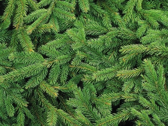 Дед Мороз ответил Милонову про срубленные елки