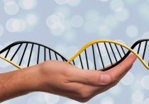 Всемирная организация здравоохранения созывает экспертов, которые займутся вопросом редактирования генома человека