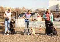 Собачьих площадок по-прежнему не хватает в Кемерове