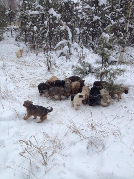 История с найденными в лесу щенками всколыхнула рязанцев