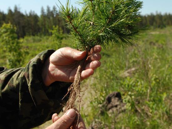 В Воронеже обсудили проект сохранения лесов