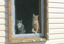 В частном приюте в Хомутово из-за морозов погибли 8 кошек