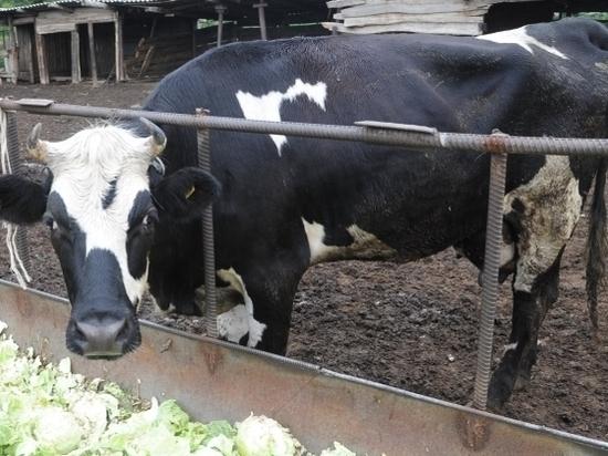 Итоги сельскохозяйственной переписи подвели в Волгоградской области