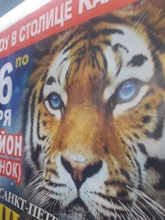 В Элисте тигр сбежал из цирка