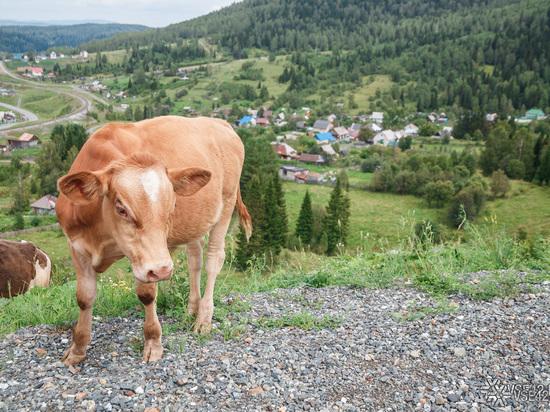 Сельское хозяйство Кузбасса получит на 330 млн рублей больше