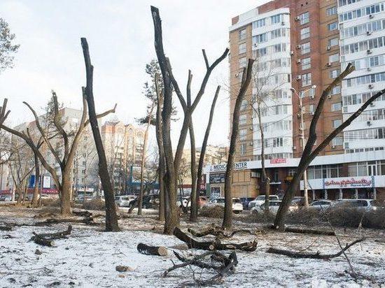 В Хабаровске сотнями вырубают деревья