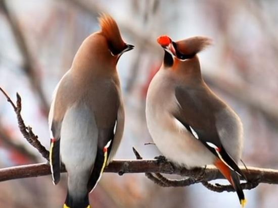 Москвичей попросили не трогать пьяных птиц