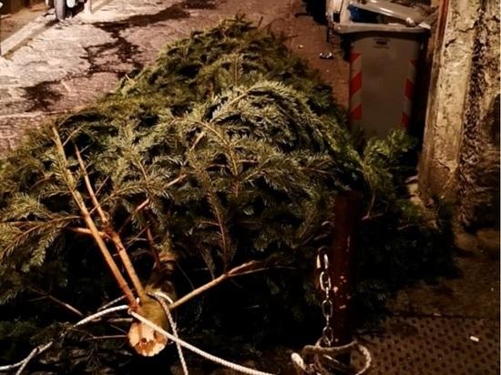 Вандалы украли рождественскую ель Неаполя ради дров