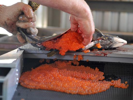 Рекордный улов лососевых снизил цены на красную икру в России