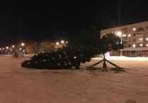 Елка в Барнауле упала в обморок