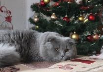 Специалисты, представляющие Российскую ассоциацию, призвали россиян не кормить домашних животных со стола в новогоднюю ночь