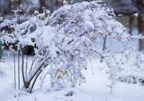 МЧС предупреждает – снегопад в Ярославле будет усиливаться