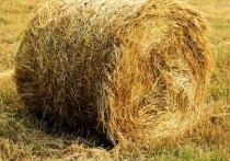 Ленивые забайкальцы украли у пенсионерки 15 стогов сена