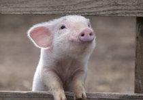 Мясом животных из Казахстана заинтересовались даже китайцы