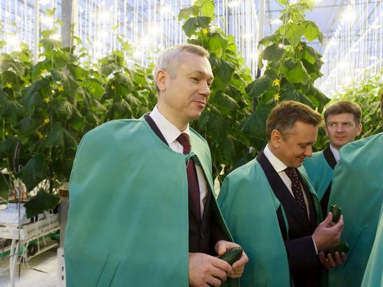 Новосибирская область планирует поставки овощей в другие регионы