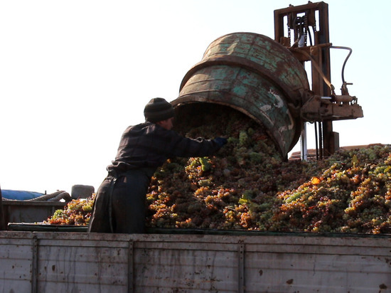 На грани бунта: крымским аграриям задолжали 50 млн рублей