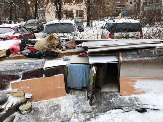 Мэрия Петрозаводска хочет снести собачью конуру и пару ларьков с остановок