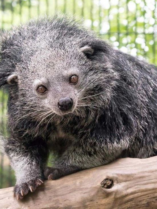 В новосибирский зоопарк из Европы приехал новый зверь