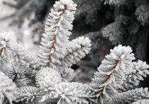Новогодние холода: в Ярославскую область идут морозы
