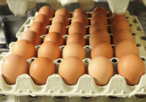 В Ялте уничтожили более пяти тысяч яиц