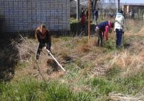 В акции «Сохраним природу Ставрополья» приняли участие 600 тысяч жителей края