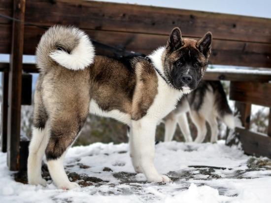 Родители покусанной собакой девочки отсудили 60 тысяч рублей у хозяев