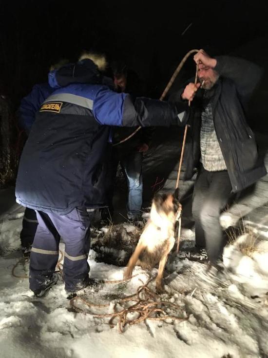 В Смоленске спасали провалившегося в колодец пса