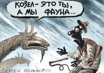 После 8 лет работы Госдума приняла во втором чтении и намерена до конца сессии принять в третьем многострадальный закон «Об ответственном обращении с животными»