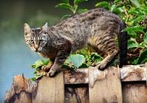 Изучив останки кошек времён викингов, датские учёные пришли к выводу, что с тех пор эти домашние любимцы увеличились в размерах примерно на 16 процентов
