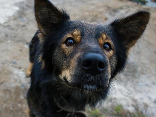 Москвич насмерть забил престарелого пса на глазах у ребенка