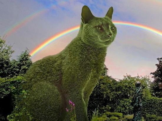 На севере Тамбова появится зелёный кот