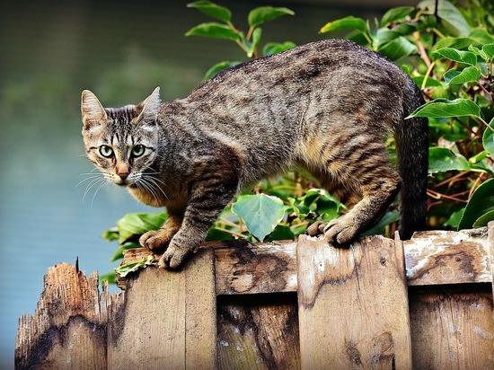 Домашние кошки викингов оказались значительно мельче нынешних