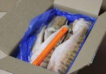 В Ивановской области из магазинов изъяли 600 кг опасной замороженной рыбы