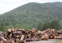 В Белорецком районе Башкирии начали наводить порядок на рынке лесозаготовок