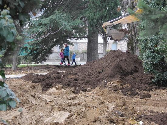 В Балаклаве при обновлении сквера изуродовали старые кедры